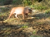 porcelet-chap-nov-2012-038